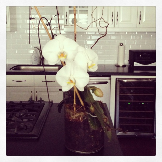 The Second Coming of My Orchid